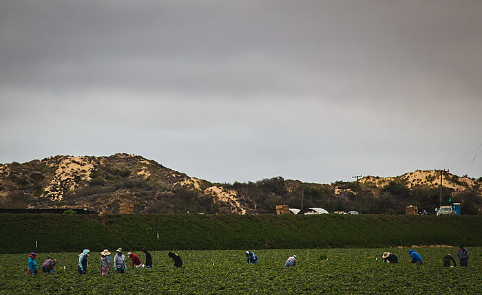 By Tony Webster from Minneapolis, Minnesota, United States - Nipomo Farm Workers, CC BY-SA 2.0, https://commons.wikimedia.org/w/index.php?curid=61599196