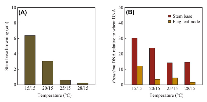 Figure 1. Effect of temperature on (Panel A) disease severity as expressed by the length of stem base browning (cm) and (Panel B) relative pathogen biomass in stem base (PB-S) and flag leaf node tissue (PB-F) as measured by Fusarium DNA relative to wheat DNA. All measurements in wheat plants were made at maturity following stem base inoculation by Fusarium pseudograminearum. Adapted from Sabburg et al. (2015).
