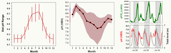 Figure 1. Left panel: monthly averages of the daily pH range from Flax Pond salt marsh, averaged across the period 2008-2012. Center panel: monthly mean pH values (black circles connected by the red line with ±1 SD shown in shading) from Flax Pond salt marsh averaged across the period 2008-2012. The blue line on the y-axis indicates the open ocean pH decline since the mid-1800s, while the red line indicates the projected decline between now and the end of the 21st century. Right panel: Variations in pH (lower panel, red line) and pCO2 (upper panel, green line) from Flax Pond salt marsh over five tidal cycles across a three day period in late July, 2012. Adapted from Baumann et al. (2015).
