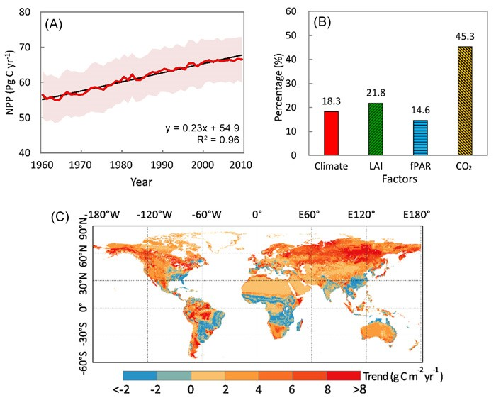 Figure 1. (A) Annual variations in global NPP between 1961 and 2010. (B) Changes in NPP that resulted from multiple environmental factors including climate, leaf area index (LAI), fraction of photosynthetically active radiation (fPAR), and CO2 in recent decades and the relative contribution rate (%) of each factor during the study period. (C) Spatial distribution of the trend in NPP during the period 1961–2010. Source: Li et al. (2017).